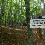 10 maggio – La foresta di Sant'Antonio